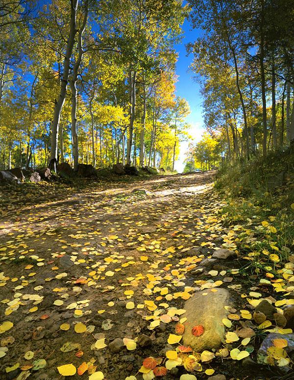fall-669299_1280